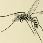 drones para combatir infeccion