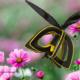Plan Bee: el dron-abeja que poliniza las flores
