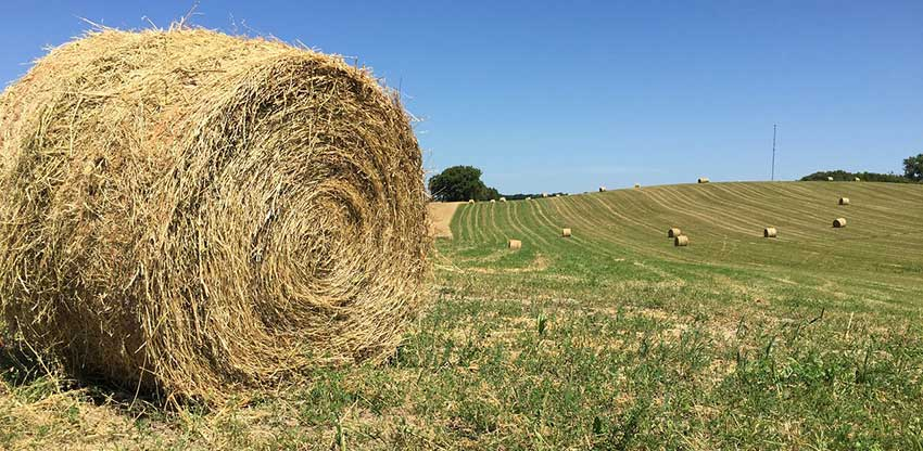 Los ojos que vigilan la codiciada alfalfa aragonesa